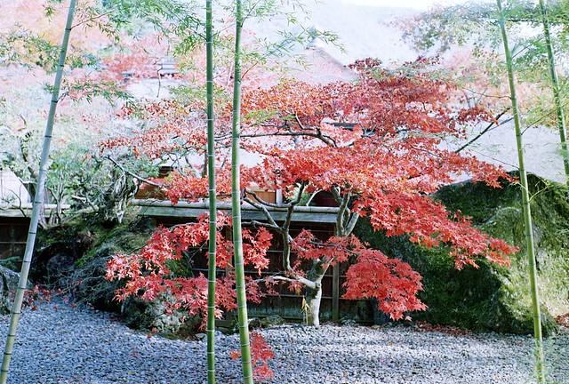 紅葉巡りin箱根美術館