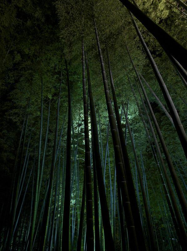 鷲峰山高台寺 竹林ライトアップ(3)