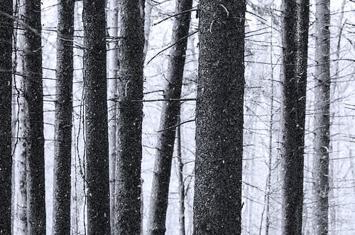 blackandwhite snow abstract tree monochrome mortonarboretum