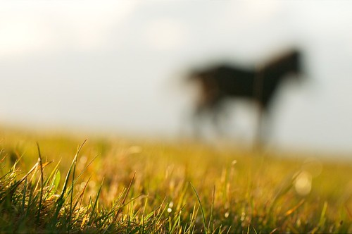 light sunset england horse green nature grass europe unitedkingdom wildlife somerset pony devon exmoor countisbury