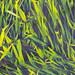 Small photo of Grass Corner