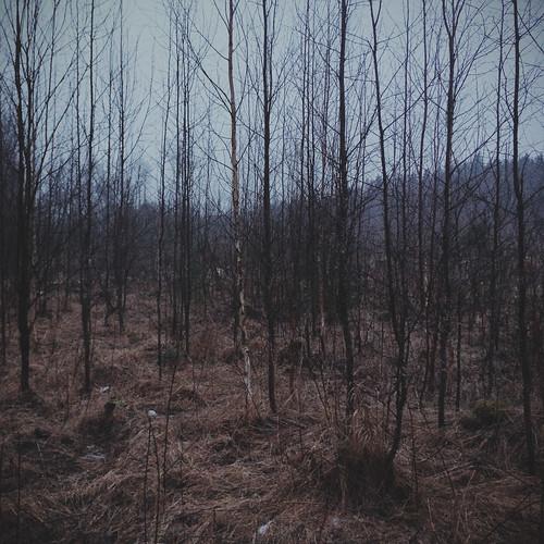 winter nature forest finland landscape europe iphone kouvola mustajoulu iphone5s vscocam