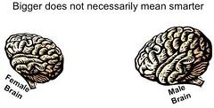 cervello maschile e femminile