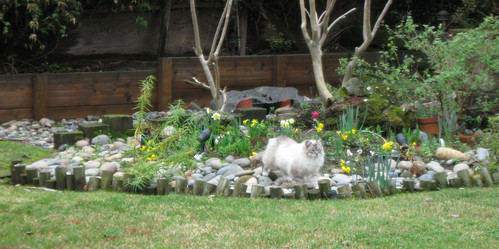 cat in daffodils