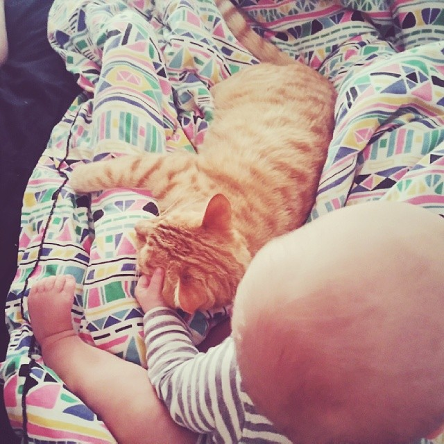 #babyjagoe wakes up at 7am every morning with a massive grin on his face, blows raspberries in my eyes, rips out my hair and searches the bed for cats, then sits and pulls at their fur gently and they don't seem to mind.