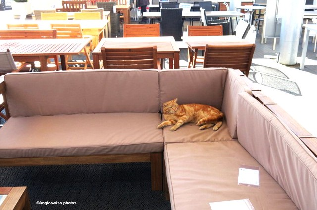 Migros Cat with the garden furniture