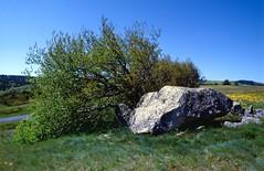 Pelouse (Lozère)