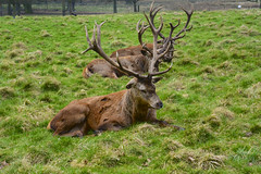 Wollaton Hall And Park 8-3-2014