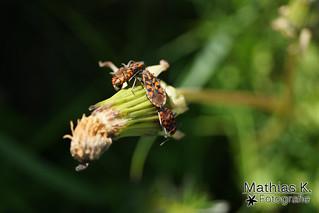 Käfer beim Sonnenbad