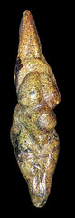 Vênus de Savignano