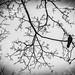 The Raven by Christian Krzywoblocki