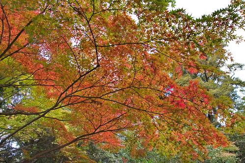 【写真】紅葉 : 向日神社