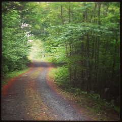 The gentle rain overnight gave our morning walk (#5) a hushed feeling. #ilovethecabin