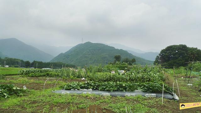 Hiking Mt. Nabewari - day trip from Tokyo 3