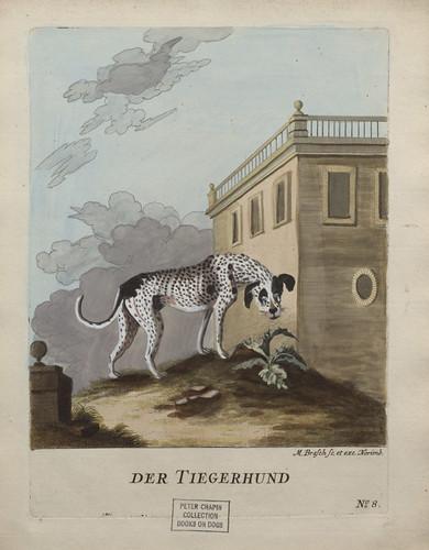 """Leaf with color illustration of dog entitled """"Der Tiegerhund"""" from Vier und zwanzig Abbildungen verschiedener Hunde"""