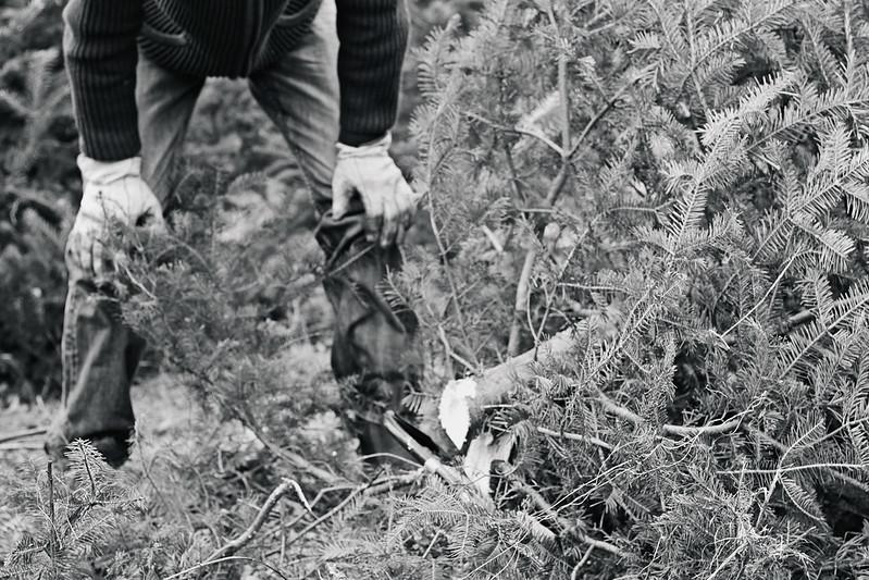 tree hunting 2013