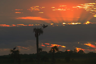 Sunrise at Viera