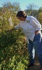 farm(0.0), flower(0.0), produce(0.0), agriculture(1.0), shrub(1.0), tree(1.0), gardener(1.0),