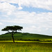 Heaven on Earth [Maasai Mara]