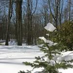 Green among the snow