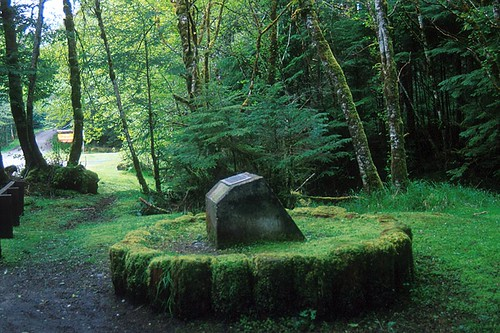 Massive Tree Stump, Old Masset, Graham Island, Haida Gwaii (Queen Charlotte Islands), British Columbia, Canada