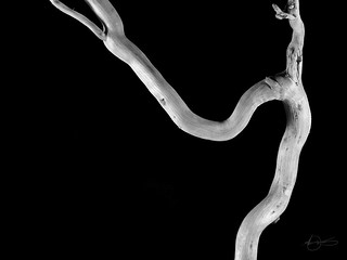 drift wood BW 1