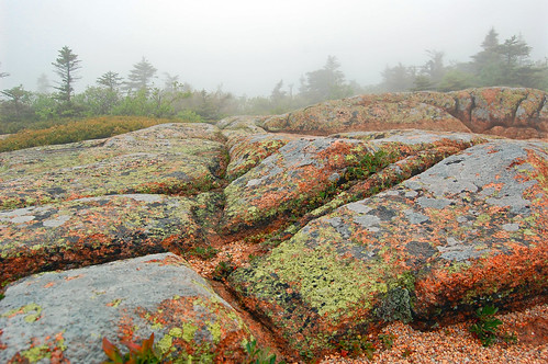 maine fog and flora