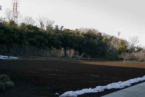 埼玉梅歩き-14