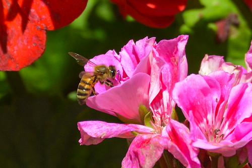 Abbie's Bee Photo