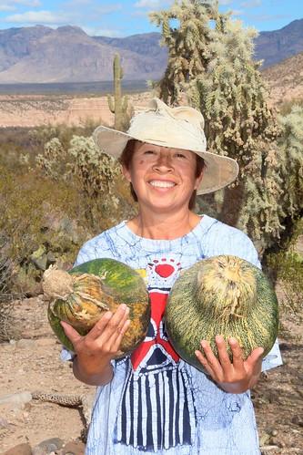 arizona usa cacti landscapes flickr desert unitedstatesofamerica hats gps queta 2013 pinalcounty sanpedrorivervalley chollacacti saguarocactuscarnegieagigantea camcanonrebelt3i jumpingchollacactuscylindropuntiafulgidachainfruitcholla