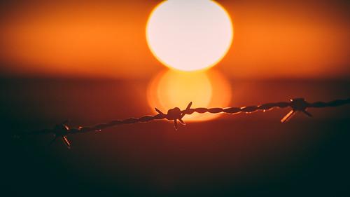 fujifilmxt1 xc50230mmf4567 handheld freehand telezoom closeup bokeh sun sunrise sunlight orange vignette barbedwire wire strands twisted copyright geo geotag järnåsen jarnasen sweden sverige scandinavia landscape macro pointofview warm östergötland linköping härnaviken nature outdoor