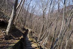 山の花道の北側の沢へ下る