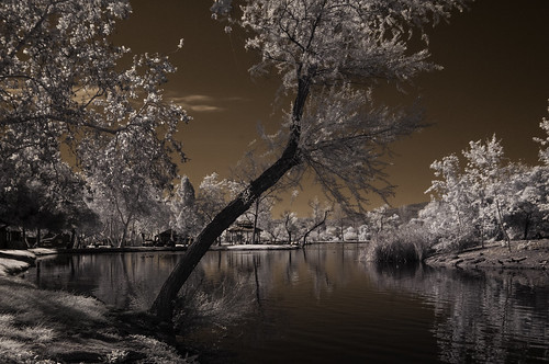 santeelakes trees reflections sky ir infrared infraredphotography composition convertedinfraredcamera highcontrast