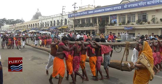 They are carrying the wood Rathyatra 2013