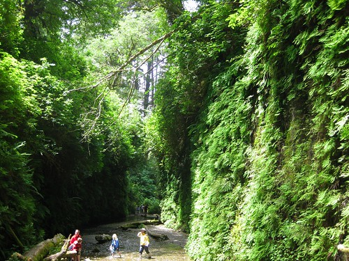Fern Canyon 9