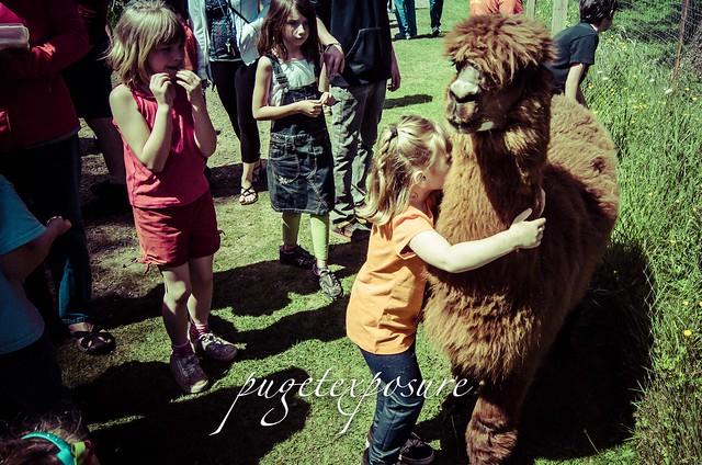 Hugging Alpaca