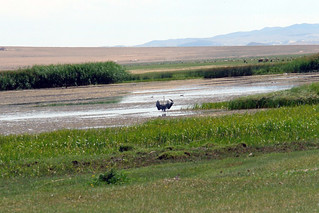 Los lagos de la zona son refugio de gran cantidad de animales que viven en completa libertad. El entorno sagrado de las dunas Mongol Els de Mongolia - 9056704923 7a07428b05 n - El entorno sagrado de las dunas Mongol Els de Mongolia