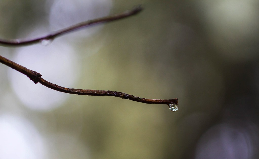Raindrop on Tree Branch