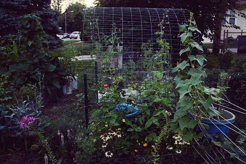 beans, cucumbers, and sweet potatoes climbing the trellis