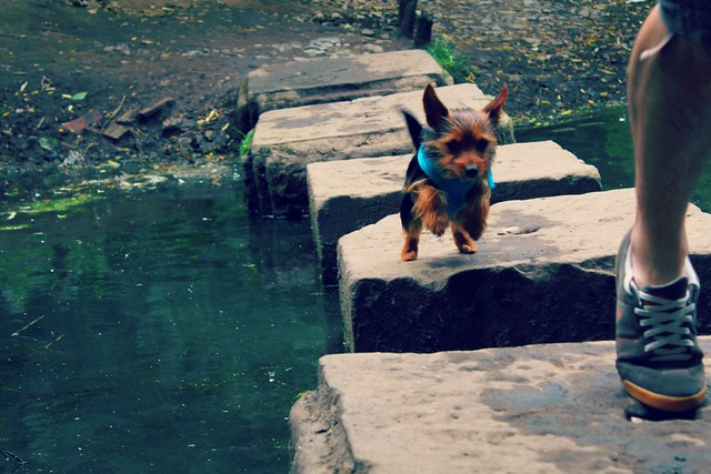 dog_jumping_across_river_stones