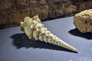 Concha gigante encontrada en los túneles catacumbas de parís - 9757239555 54765b2938 n - Catacumbas de París, donde se guarda la historia de la ciudad.