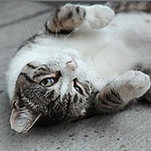 Flickr: Discussing Strange Cat names in I love my cat