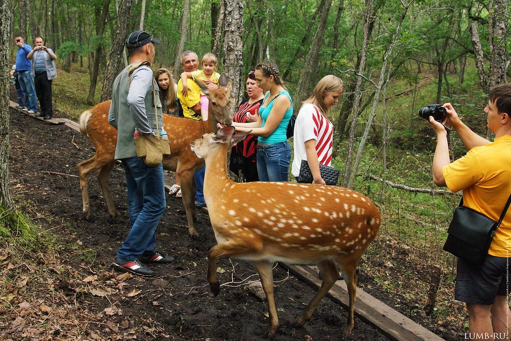 2013.07.28 Сафари-парк Владивосток
