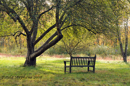 Beneath the Shady Tree by Paula Stephens