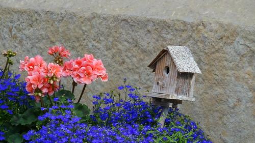 Die Blume der Blumen in Dresden grüßt dich vieltausendmal  ein sanfter Hauch so neu wie die Sonne an diesen Tag 0180