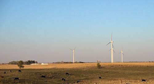 fall windmill landscape cornfield day cattle iowa clear windfarm fromtheroad gf1 views100 projectweather