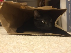 Martha cat in paper bag