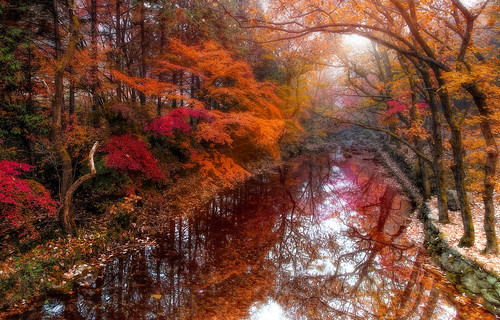 Lovely memories of the autumn