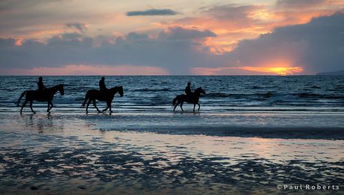 Irvine Beach Horses [IMG_4782]