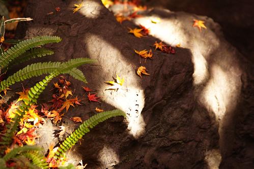 光と影と葉たち by leicadaisuki